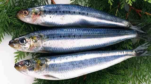 孕妇怀孕期间能吃鲅鱼,马交,巴鱼,燕鲅鱼吗